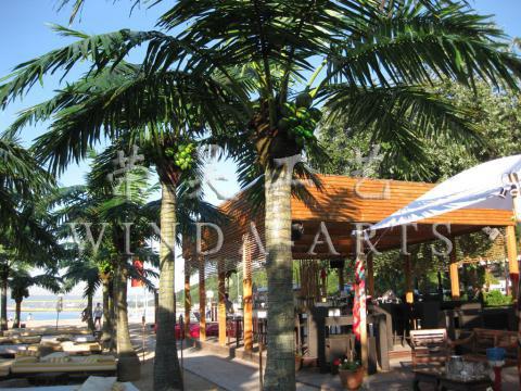 Bulgarian coconut palm tree